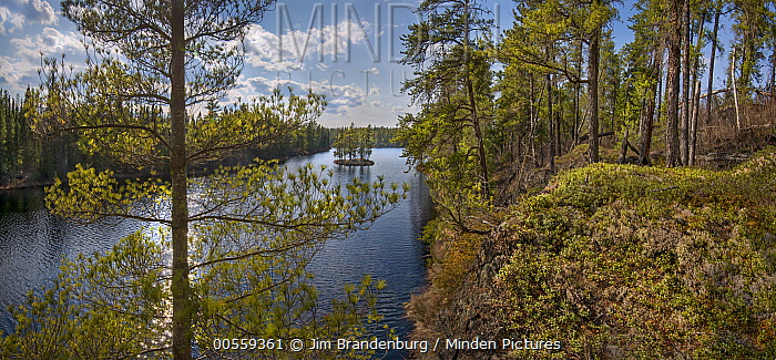 Shoreline, Discovery Lake, Boundary Waters Canoe Area Wilderness, Minnesota