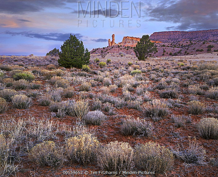 Rock formation in desert at dawn, Chimney Rock, Ghost Ranch, New Mexico