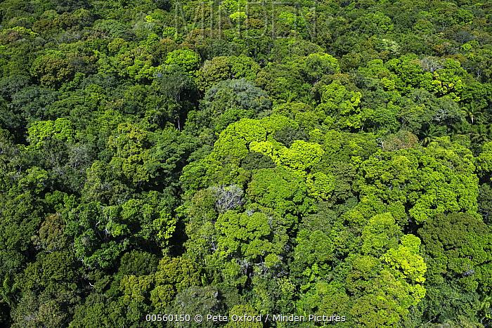 Rainforest canopy, Rupununi, Guyana