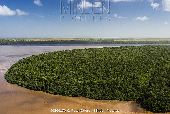Mangrove (Rhizophora sp) forest, Georgetown, Guyana
