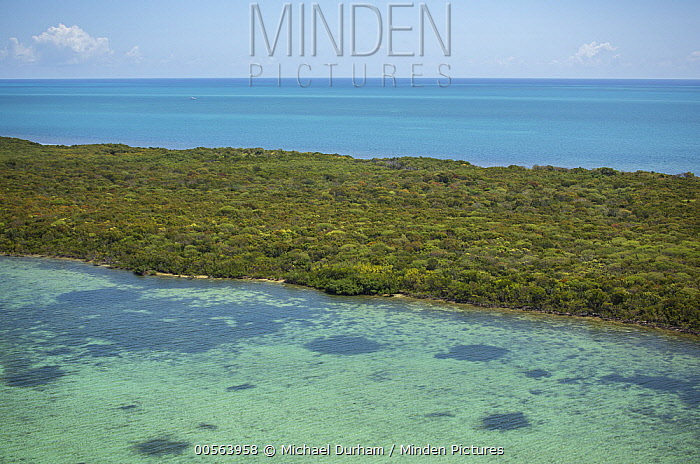Red Mangrove (Rhizophora mangle) island, Biscayne Bay, Florida