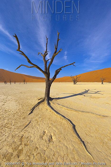Dead trees in front of sand dunes, Sossusvlei, Namib-Naukluft National Park, Namibia