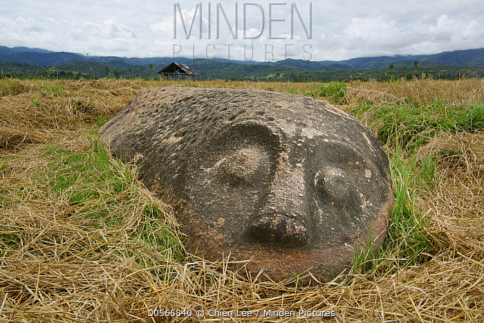 Megalith, Patung Kerbau, Central Sulawesi, Indonesia
