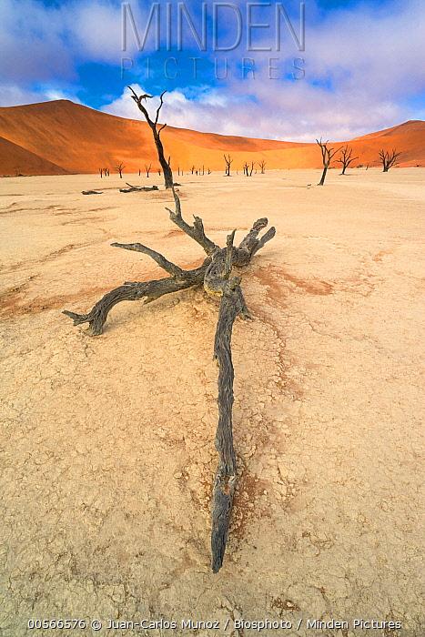 Dead tree, Dead Vlei, Namib-Naukluft National Park, Namibia