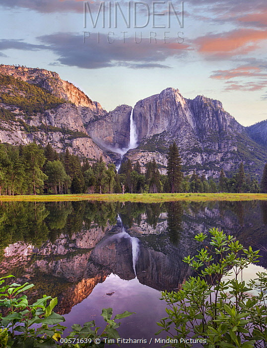 Yosemite Falls reflected in flooded Cook's Meadow, Yosemite Valley, Yosemite National Park, California