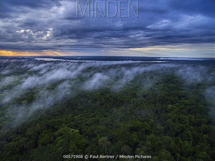 Sunrise over rainforest, Amazon, Yasuni National Park, Ecuador