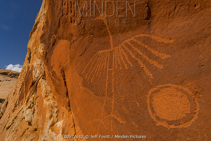 Thunderbird petroglyph made by Ancestral Puebloans, Comb Ridge, Cedar Mesa, Bears Ears National Monument, Utah