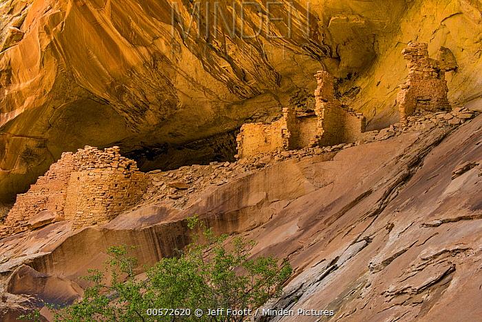 Monarch Cave Ruin, Comb Ridge, Cedar Mesa, Bears Ears National Monument, Utah