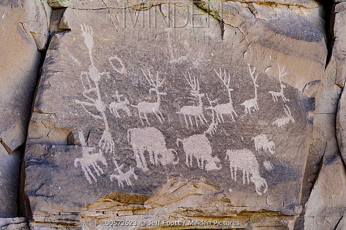 Elk and bison petroglyphs made by Ancestral Puebloans, Cedar Mesa, Bears Ears National Monument, Utah