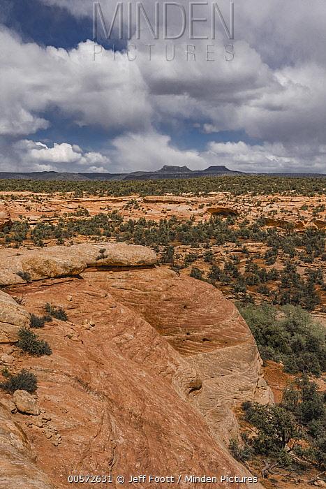 Sandstone cliff and Bears Ears mesas, Bears Ears National Monument, Utah