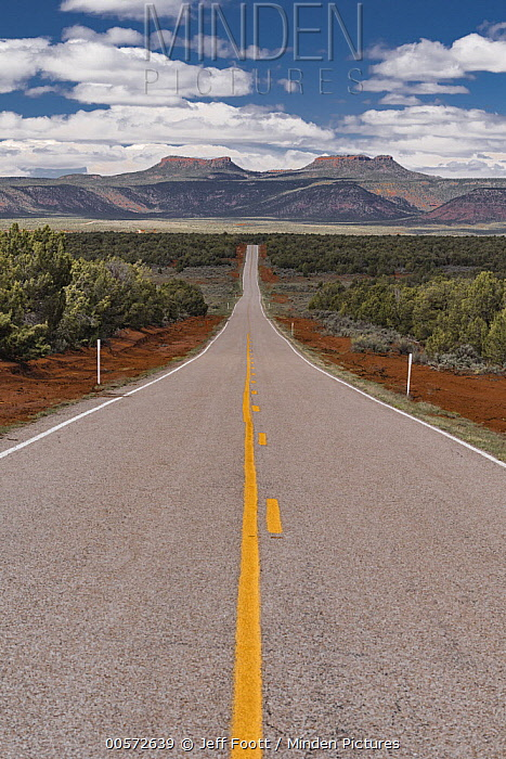 Road and Bears Ears mesas, Bears Ears National Monument, Utah