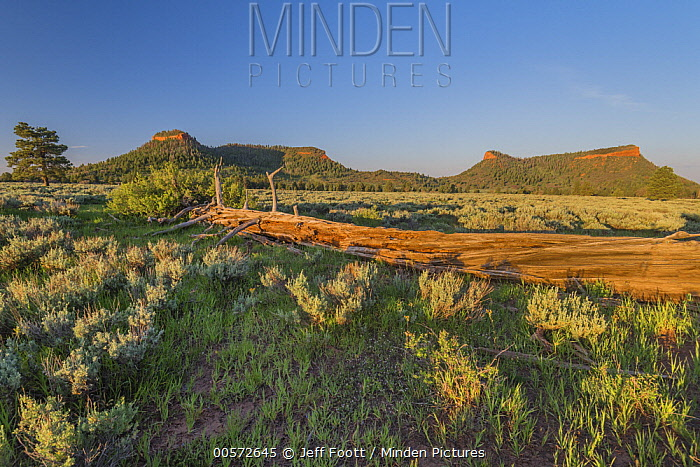 Mesas, Cedar Mesa, Bears Ears National Monument, Utah