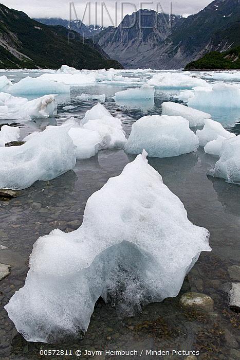 Sea ice chunks in bay, Glacier Bay National Park, Alaska