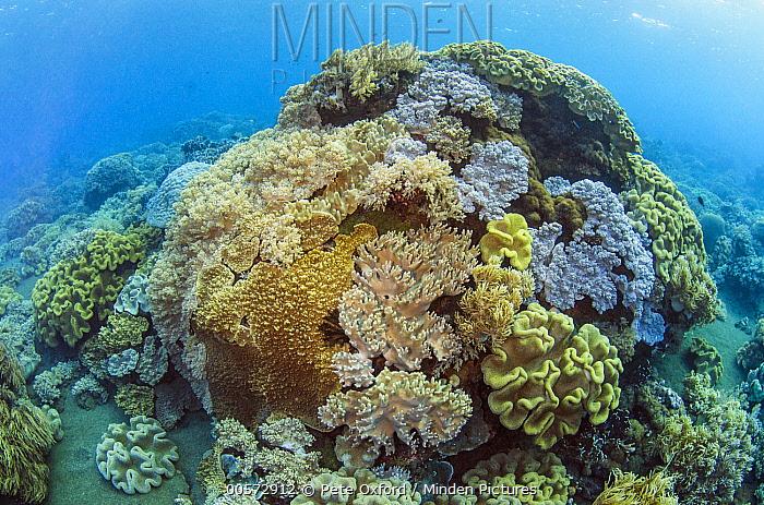 Coral reef, Banda Sea, Indonesia