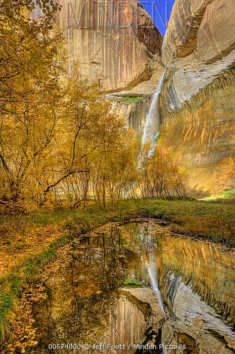 Trees in fall near Calf Creek Falls, Grand Staircase-Escalante National Monument, Utah