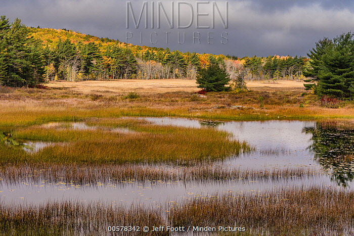 Wetland and meadow, New Mills Meadow Pond, Acadia National Park, Maine
