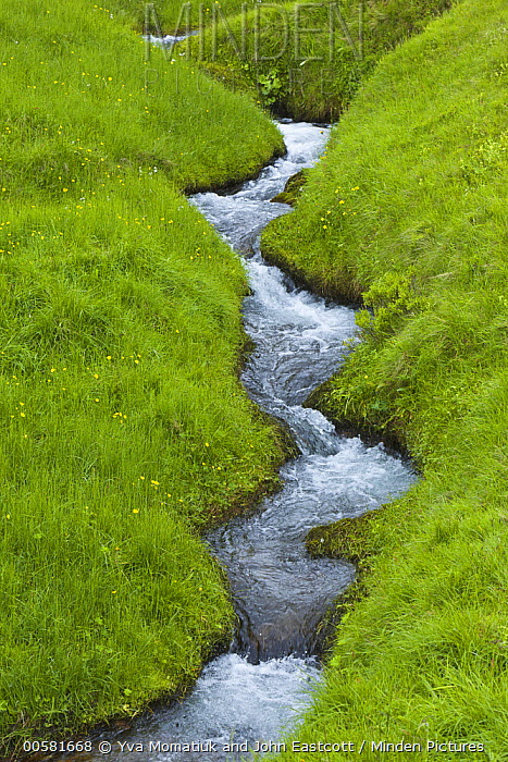Stream in spring meadow, Haganesvik, Iceland