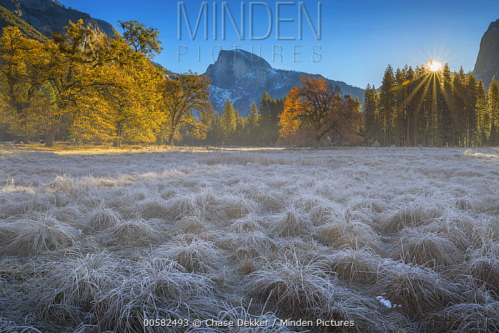 Frost-covered meadow, Half Dome, Yosemite National Park, California