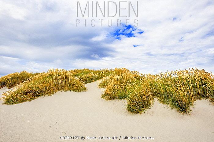 Sand dunes and grass, Sealion Island, Falkland Islands