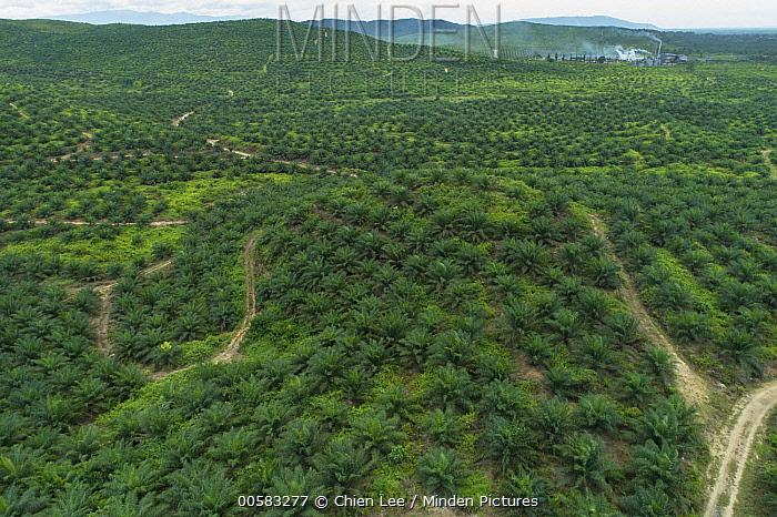 African Oil Palm (Elaeis guineensis) plantation and refinery, Kalabakan, Sabah, Malaysia