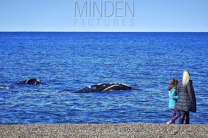 Southern Right Whale (Eubalaena australis) pair surfacing near tourists on beach, Chubut, Argentina