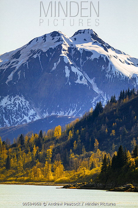 Taiga and coastal snow-covered mountains in autumn, Glacier Bay National Park, Alaska