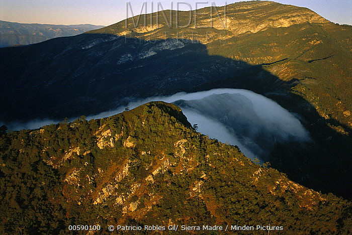 Minden Pictures stock photos - Fog rolling over cloud forest