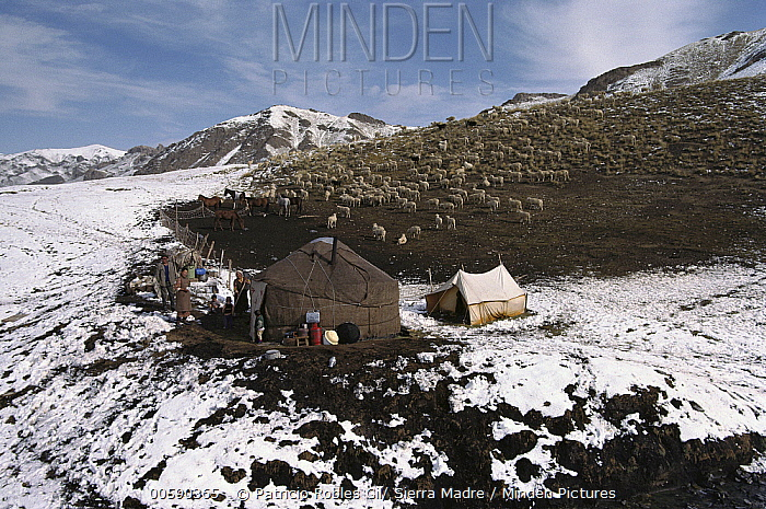 Kirguitz Sheep herders' yurt in Tien Shan Mountains, Kyrgyzstan  -  Patricio Robles Gil/ Sierra Madr