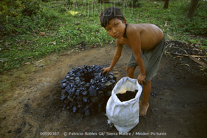 Young boys charcoal mining in the Indo-Burma hot spot  -  Patricio Robles Gil/ Sierra Madr