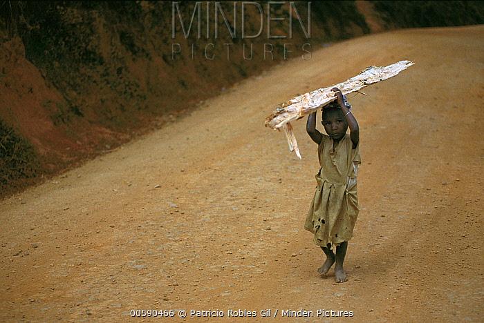 Young girl with firewood, Usambara Mountains, north Tanzania  -  Patricio Robles Gil/ Sierra Madr