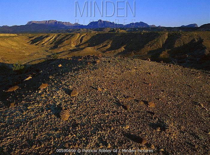 Arid landscape, Chihuahuan Desert, Mexico  -  Patricio Robles Gil/ Sierra Madr