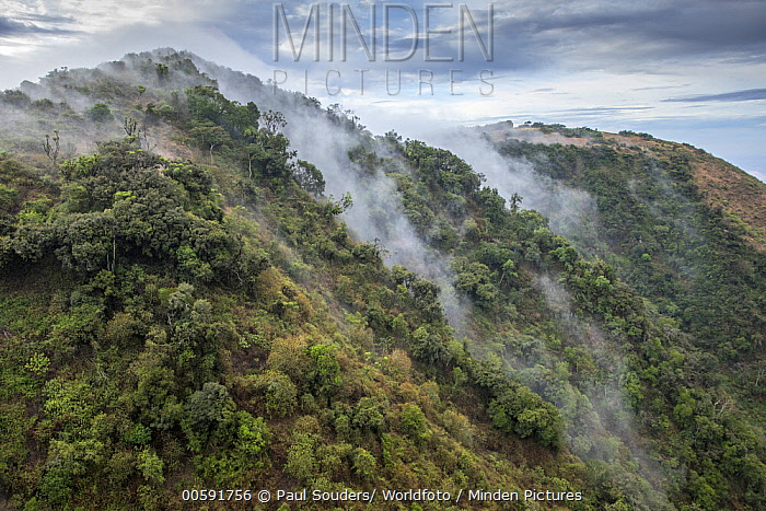 Forested hills in mist, Ngong Hills, Kenya