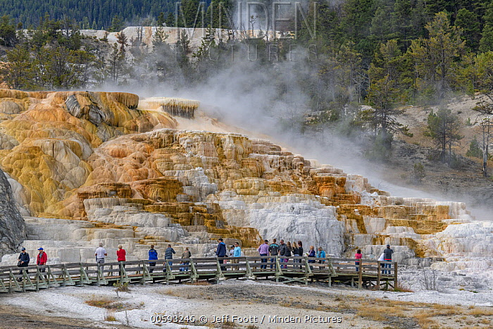 Tourists at travertine formations, Palette Spring, Mammoth Hot Springs, Yellowstone National Park, Wyoming