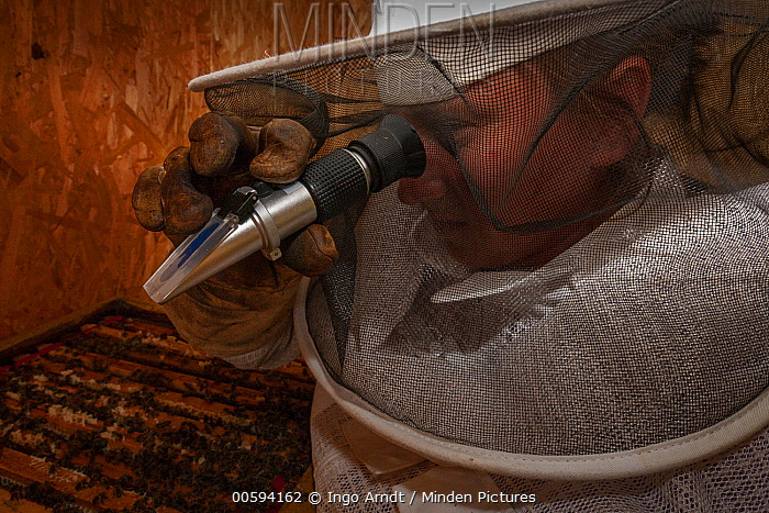 Honey Bee (Apis mellifera) honey moisture levels measured by beekeeper, Agnieszka Brand, Germany