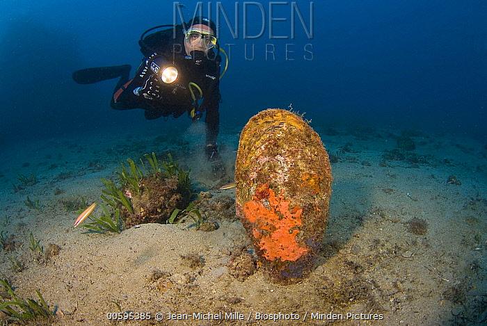 Pen Shell (Pinna nobilis) and diver, Mediterranean Sea, Monaco