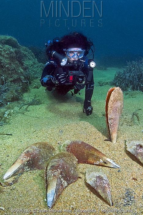 Pen Shell (Pinna nobilis) group killed by parasitic Haplosporidium (Haplosporidium nelsoni), Corsica, France