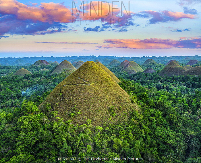 Chocolate Hills, limestone covered in grass reaching up to 164 feet high, Bohol Island, Philippines
