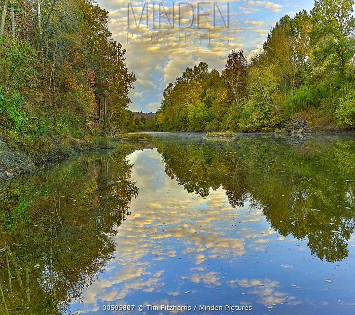 Oak (Quercus sp) and Hickory (Carya sp) forest along river, Arkansas