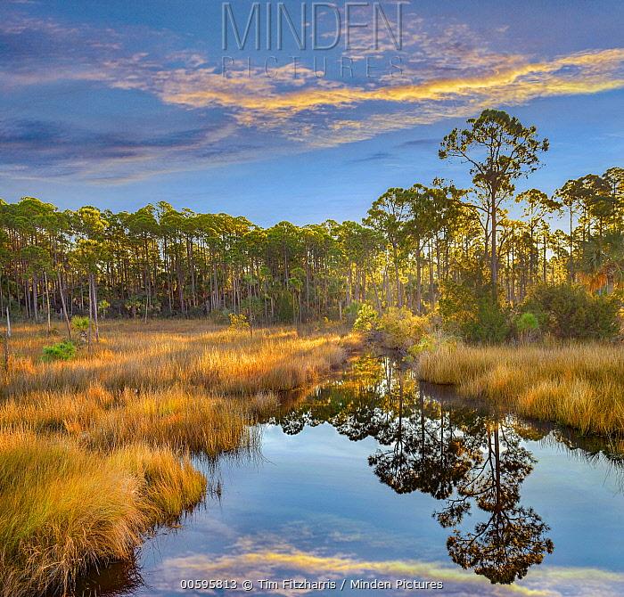 Marsh and trees at sunrise, Saint Joseph Peninsula, Florida