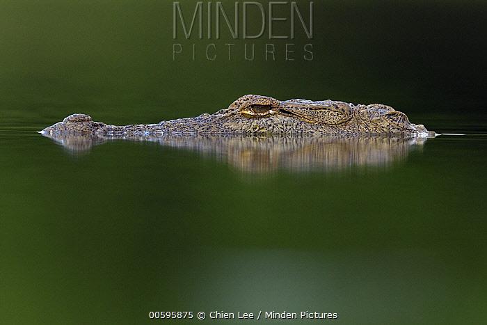 Mugger Crocodile (Crocodylus palustris), Yala National Park, Sri Lanka