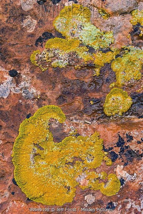Lichen on sandstone, Arches National Park, Utah
