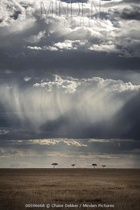 Storm clouds over savanna, Masai Mara, Kenya