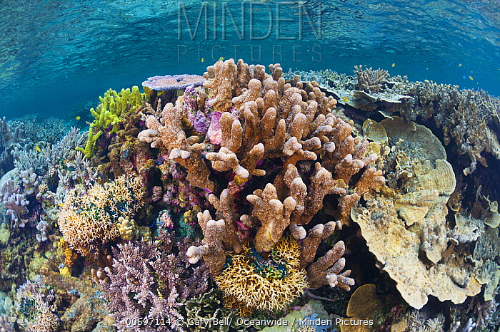 Coral reef, Milne Bay, Papua New Guinea