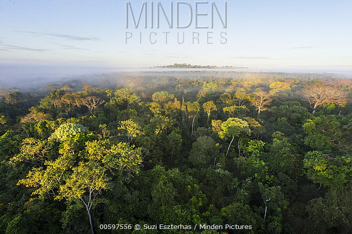 Sunrise over rainforest tree canopy, Amazon, Brazil