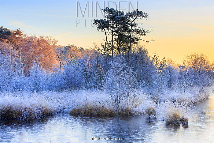 Wetland with frost at sunrise, Haaksbergerveen, Overijssel, Netherlands