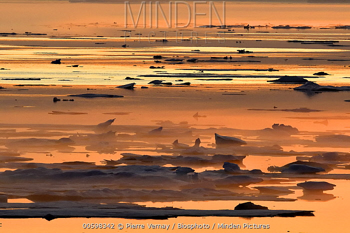 Ice floes at sunset, Scoresbysund, Greenland