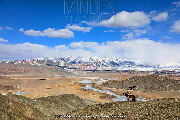 Golden Eagle (Aquila chrysaetos) hunter on horseback, Altai Mountains, Bayan Ulgii, Mongolia