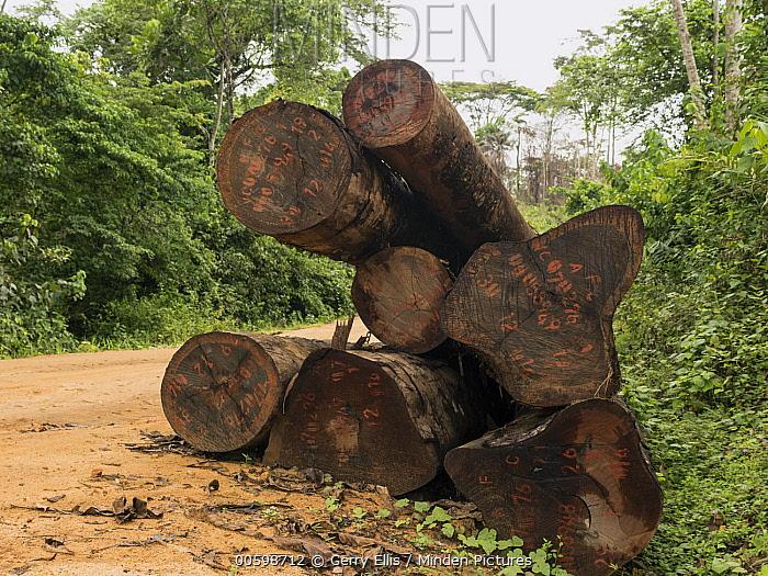 Rainforest logs on logging road, Cameroon