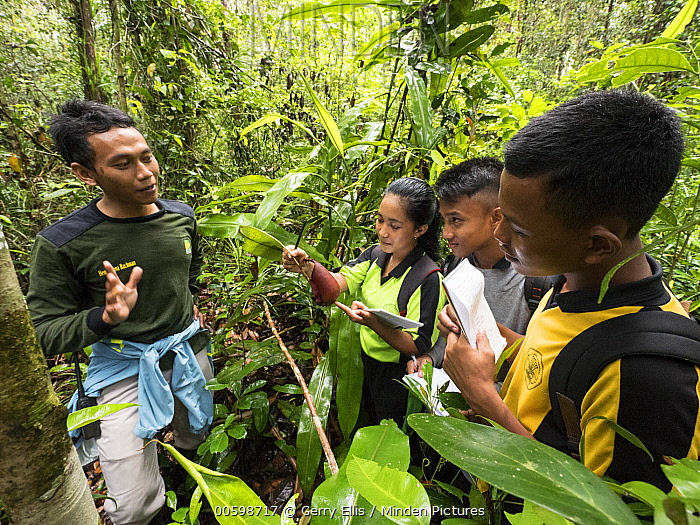 Pitcher Plant (Nepenthes sp) being learned about by junior high students in high conservation area within plantation, West Kalimantan, Borneo, Indonesia
