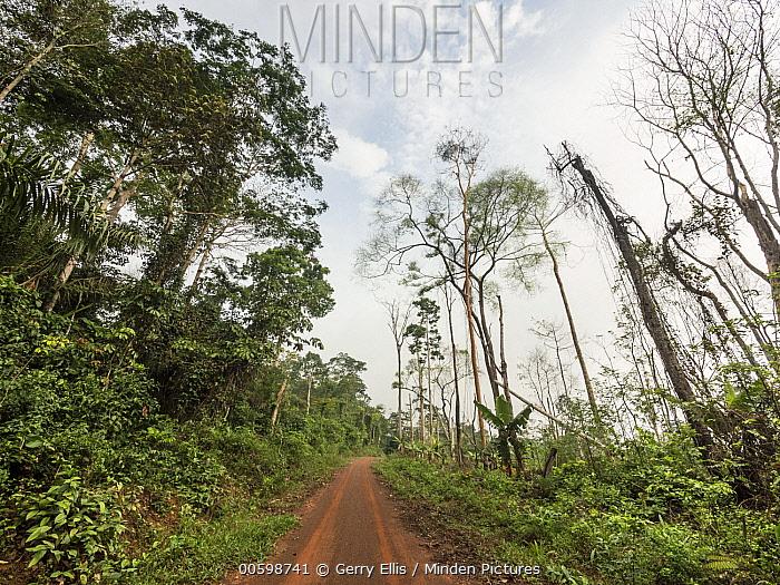 Slash-and-burn deforestation on small oil palm plantation, Cameroon